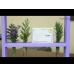 Flora (Флора) капсули - нормальна мікрофлора кишечника, травлення, імунітет