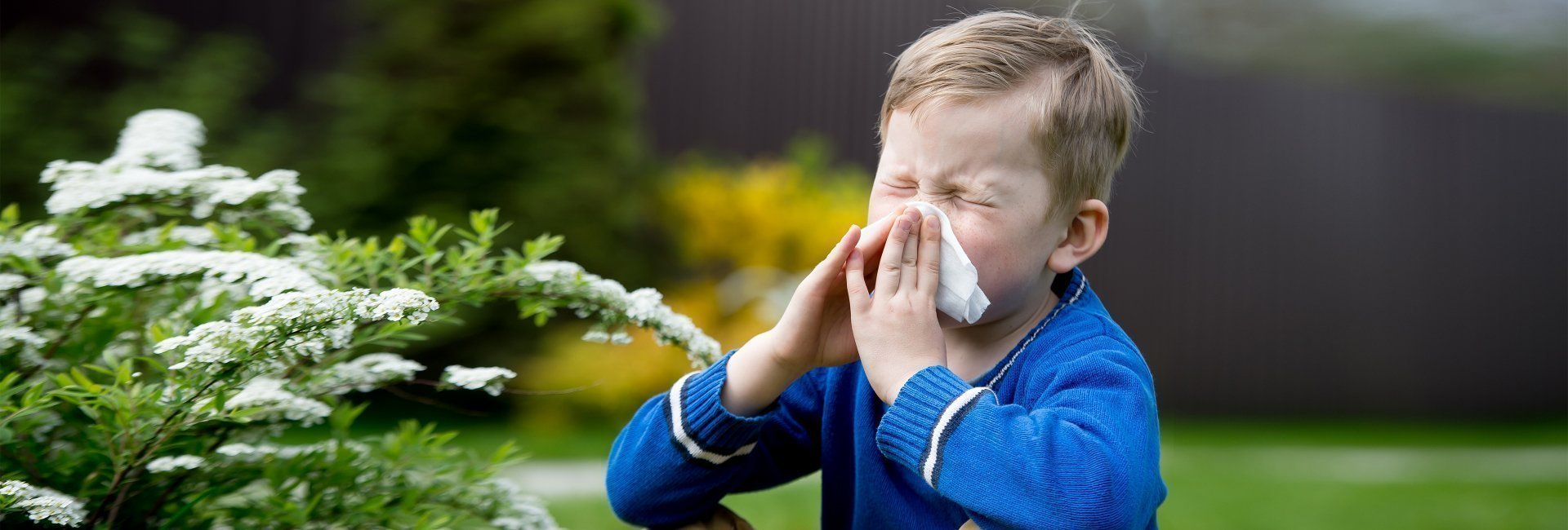 Поллиноз – пыльцевая аллергия