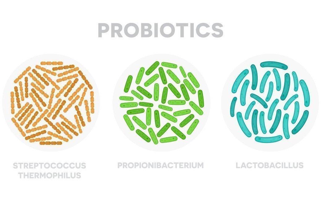 Як правильно вибрати Пробіотики. Що краще біфідобактерії або лактобактерії?